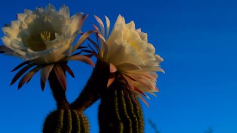 Timelapse-flower