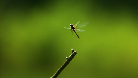 Dragonfly-in-ultra-slow-motion