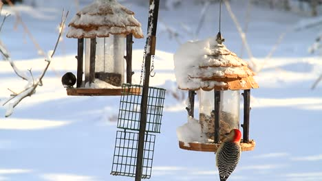 birds-on-feeders