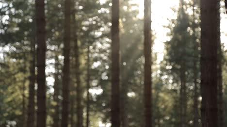Blurry-Trees-Background-Loop-1