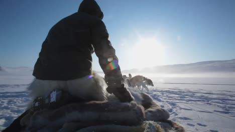 dogsledding-in-greenland