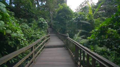 Moving-Along-a-Wooden-Jungle-Walkway
