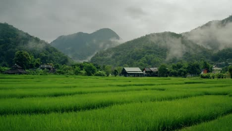 Rice-Paddies-in-Thailand-01