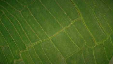Rice-Paddy-Fields-From-Above