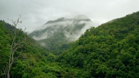Rain-Forest-Canopy