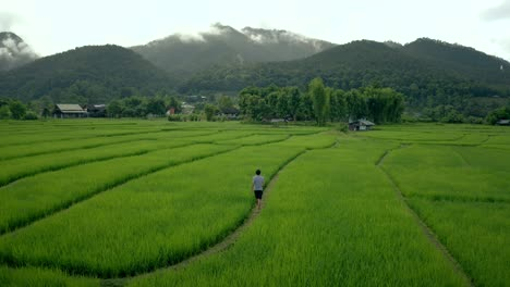 Man-Walks-Through-Rice-Fields