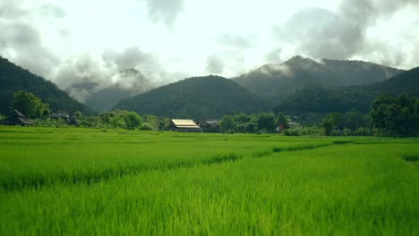 Flying-Over-Rice-Paddies-02