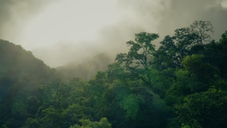 Misty-Jungle-Canopy